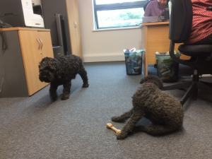 All in a day's work: Buster, left, and Kola in the office at Basepoint Haywards Heath